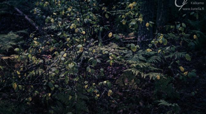 Autumn leaves. Photographer Kati Kalkamo.
